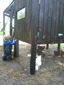 hønsehus byggeri